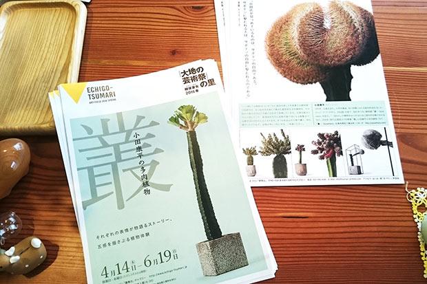 「叢‐小田康平の多肉植物‐」パンフレット